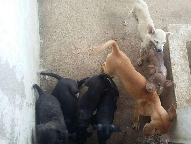 cachorros_CCZ