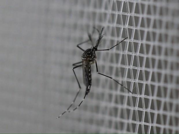 dengue06082016