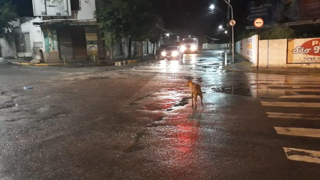 Cachorros no meio o cruzamento da Avenida Francisco Pinheiro de Almeida Com a Rua Emiliano Pinto (foto: Jackson Perigoso/RC)